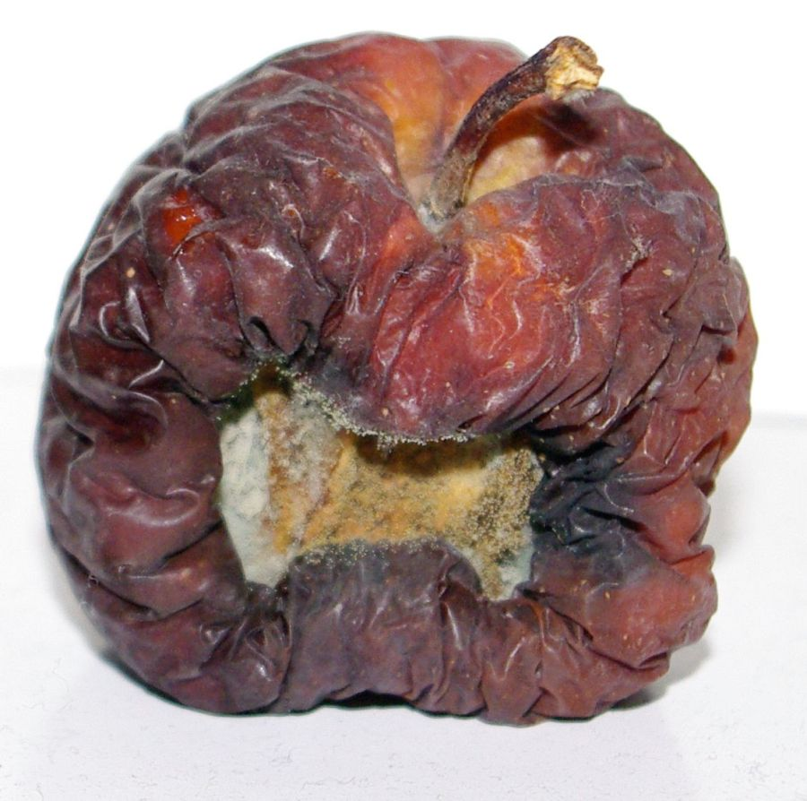 last-february-apple